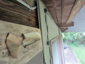 キイロスズメバチたちが壁のすき間から出入り 郡山市、9月上旬.jpg