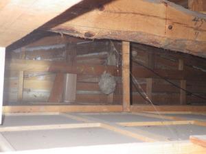 キイロスズメバチの屋根裏の巣は通気口から直下20cmほど離れた所(郡山市).jpg