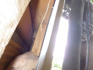 キイロスズメバチの巣は壁の穴の出入り口から1mほど奥の壁の中(田村市).jpg