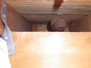 キイロスズメバチの巣は軒天の穴からズーっと奥の方(郡山市).jpg