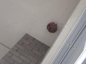 キイロスズメバチの3階軒下の巣(福島県三春町).jpg