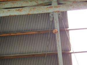 コガタスズメバチが高いところに作った巣 田村市、7月下旬