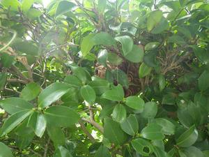 コガタスズメバチに刺された現場(福島市、2013年8月5日).jpg