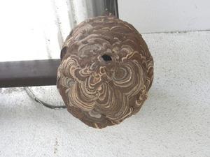 コガタスズメバチの巣が軒下に 福島市、11月下旬.jpg