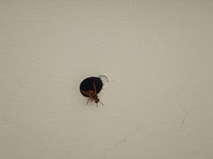 スズメバチが出入りする直径2cmほどの軒天にある小さな穴(郡山市).jpg