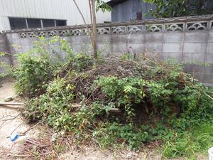 スズメバチが駆除後も出入りするという庭にある木の枝を堆積した場所(郡山市).jpg