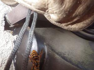 スズメバチたちが出入りする瓦屋根とベランダが重なり合う小さな隙間(田村市).jpg