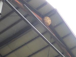 スズメバチの巣は資材置場の天井の最も高い所に(須賀川市).jpg