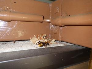 スズメバチの巣への出入り口.jpg