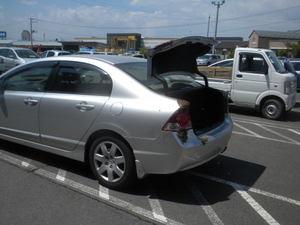 セイヨウミツバチの分蜂群が自動車にベッタリ(郡山市、2011年6月6日).jpg