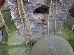 ヒメスズメバチがお稲荷様の中に巣を作る(喜多方市、2013年7月23日).jpg