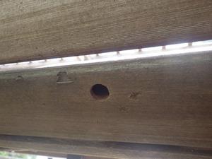 ベンチにもあったクマバチの巣(郡山市、2014年5月7日).jpg