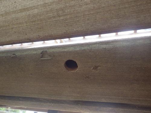 クマバチ 巣 軒下