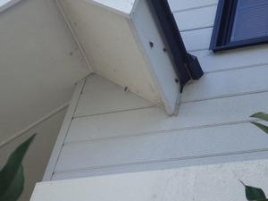 二本松市でちょっとした隙間から出入りするスズメバチ.jpg