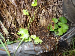 会津美里町でスズメバチの巣への出入り口.jpg