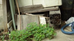 会津若松市でスズメバチの巣は奥の方.jpg