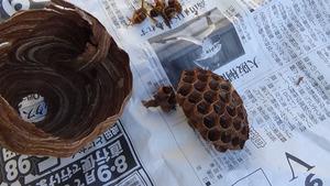 喜多方市でスズメバチ駆除-引っ越し巣.jpg