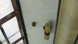 喜多方市でスズメバチ駆除の現場-引っ越し巣.jpg
