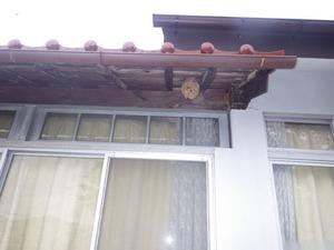 国見町でスズメバチ駆除の現場.jpg