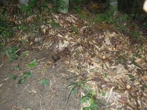 土の中のオオスズメバチの巣への出入り口となる巣穴(郡山市).jpg