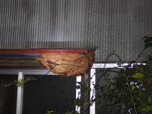 大玉村で軒下に奇妙なスズメバチの巣.jpg