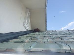 屋根の軒下にキイロスズメバチの薄っぺらな巣(須賀川市、2013年10月14日).jpg