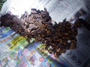 平田村で駆除したスズメバチの巣.jpg