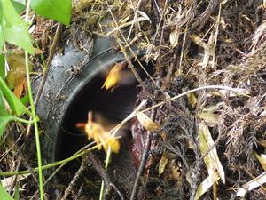 本宮市で古タイヤの中にスズメバチの巣.jpg