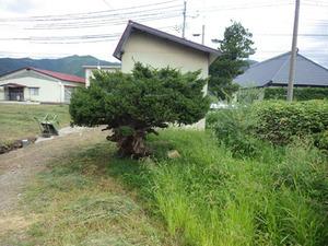 猪苗代町でスズメバチ駆除の現場.jpg