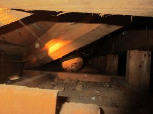 玄関屋根裏のキイロスズメバチの巣に接近して真横から撮影 いわき市、7月下旬