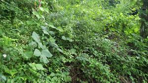 田村市でスズメバチの母巣の駆除現場.jpg