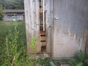 田村市で壁の中のスズメバチの巣.jpg