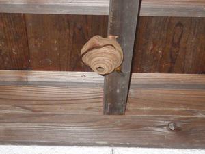 田村市で玄関に引っ越してきたスズメバチ駆除.jpg