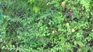 白河市でスズメバチを駆除した現場.png