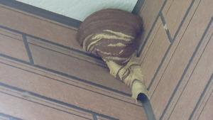白河市で軒下のスズメバチの巣.jpg