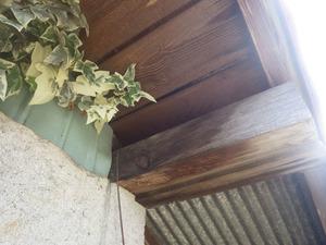 矢吹町でスズメバチが出入りする場所.jpg