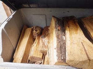 矢吹町で容器の中にあったスズメバチの巣.jpg