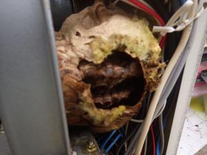 矢吹町で給湯器で元気がないスズメバチの巣.jpg