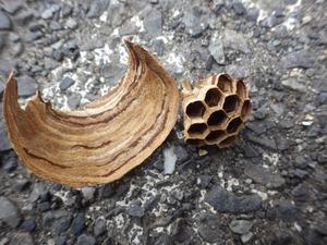 矢吹町で駆除したスズメバチの巣.jpg