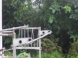 石川町でスズメバチが飛んでゆく家の裏にある林.jpg