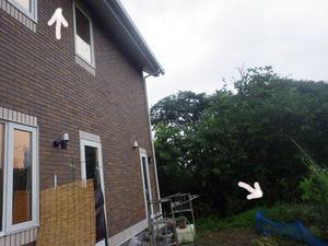 石川町でスズメバチの巣の位置関係.jpg