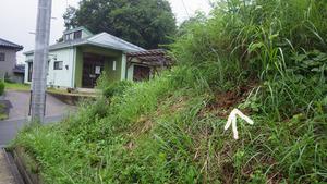 石川町でスズメバチ駆除の現場.jpg