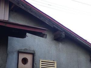 磐梯町で壁に中のスズメバチ駆除.jpg