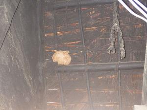 福島の解体現場のスズメバチの巣.jpg