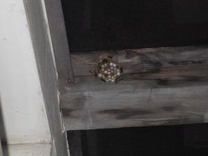 福島市でベランダ天井のアシナガバチの巣.jpg