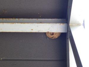 福島市で玄関天井のスズメバチの巣.jpg