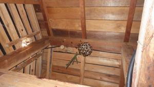 福島市の屋根裏のモンスズメバチの巣.jpg
