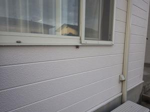窓枠に作ったアシナガバチの巣(須賀川市).jpg