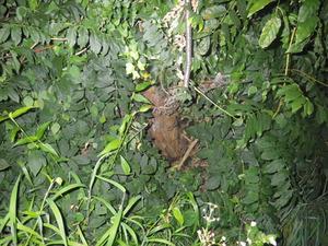 郡山市でオオスズメバチの巣がある切り株.jpg