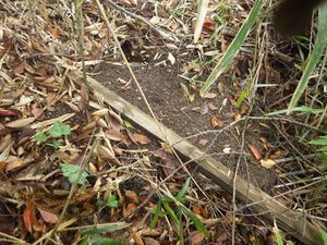 郡山市でオオスズメバチの巣がある証拠.jpg